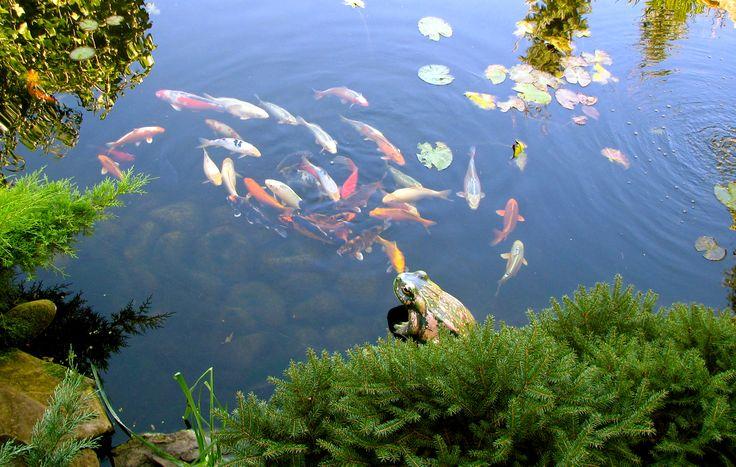 Традиционный японский сад обязательно включает водный элемент — ручей или пруд. Ландшафтный дизайн реализован студией Укр Ландшафт www.ukrpark.com