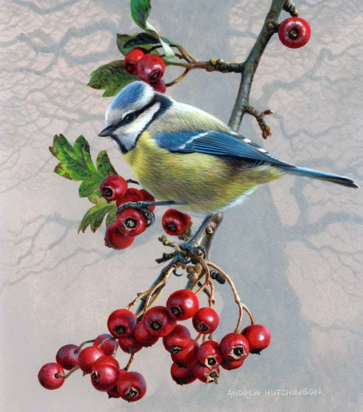 Вмф, открытки птица на ветке