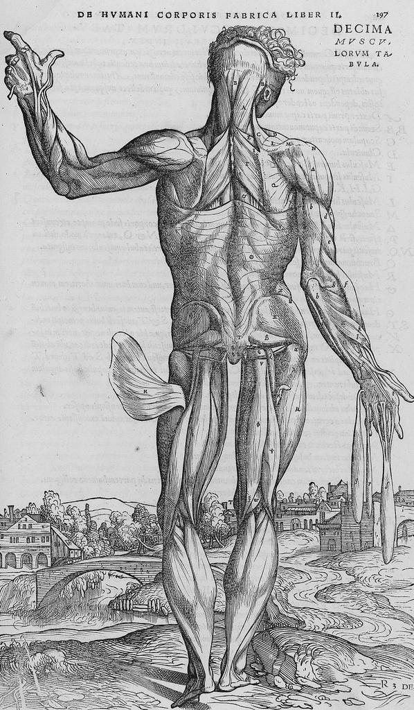 12 besten Human anatomy Bilder auf Pinterest   Andreas vesalius ...