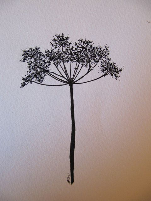 Queen Anne's Lace Drawing by apoolew2o, via Flickr Amelia Poole