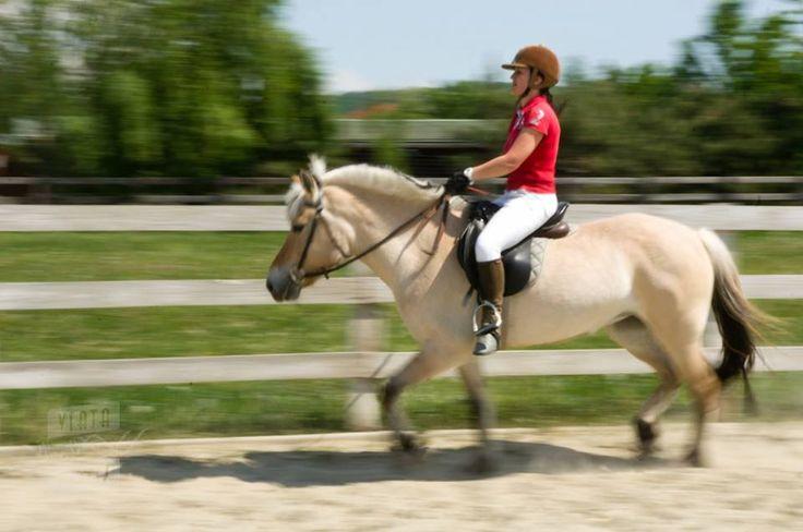 Trebuie să ştii, de exemplu, că un cal tânăr nu este tocmai potrivit pentru un debutant. Fiind începător, dacă este încălecat tot de un debutant, se pot întâmpla accidente nedorite. www.horseland.ro