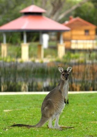 Pinnaroo, Western Australia