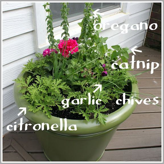This is a WONDERFUL idea, an anti-mosquito planter. I'll be doing this one in the late spring. I hope that it really does repel mosquitoes.