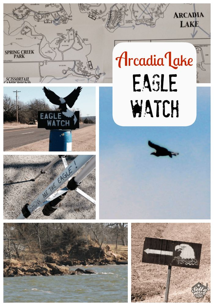 Have you ever seen the eagles soar at Arcadia Lake? If not, you need add Eagle Watch to your weekend plans. It starts tomorrow!