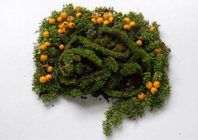 sculptures organes humains en vegetaux intestins   Sculptures dorganes humains en végétaux   vegetal Sculpture photo organe image Camila Car...
