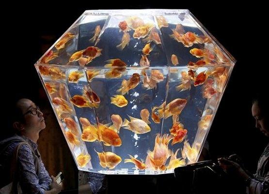Unique Fish Tank Unusual Fish Tanks Pinterest