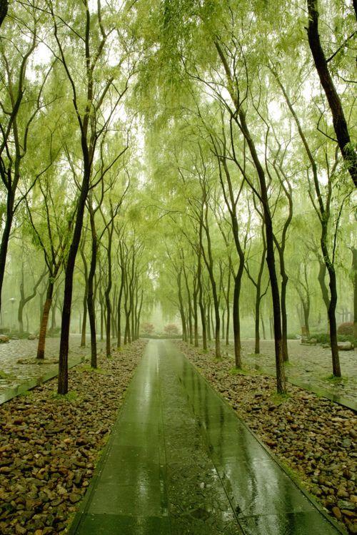 .: Forests, Paths, Parks, Trees, Places, Pathways, Landscape, Roads, Long Walks
