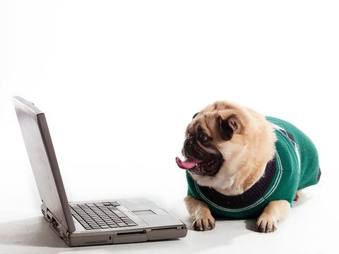 TnT Petsitting provides pet sitting services in Huntsville, AL Call Tony at 256-714-6795