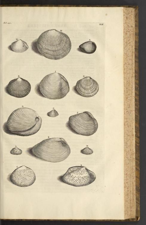 more@ - 1705 - D'Amboinsche rariteitkamer : by Rumpf, Georg Eberhard, 1627-1702;  The majority of the plates are engraved by Jacob de Later, believed to be after illustrations by Maria Sybilla Merian