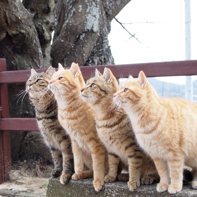 1000 Images About Cats On The Fence On Pinterest Cute