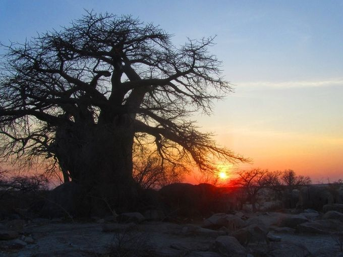 "Photo ""Botswana,KubuIslandintheMakgadigadiPans."" by maryannwest"