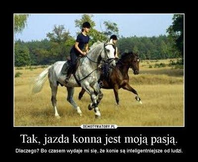 Kocham Konie Fryzyjskie - 3 marca 2014 - archiwum konie2002.pinger.pl
