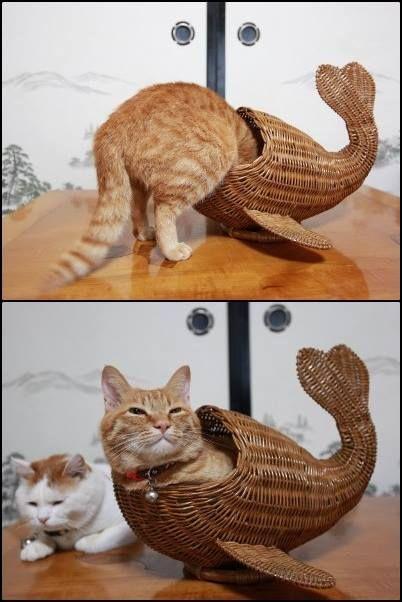 魚になったにゃんこ♪