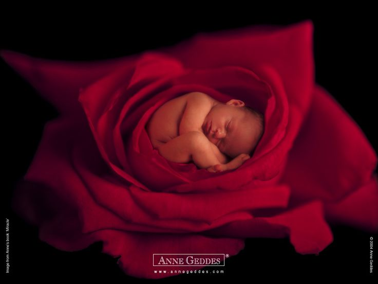 Anne Geddes Baby Photogaphy -  Anne Geddes Babies,  Flower Babies  1024*768   Wallpaper 11