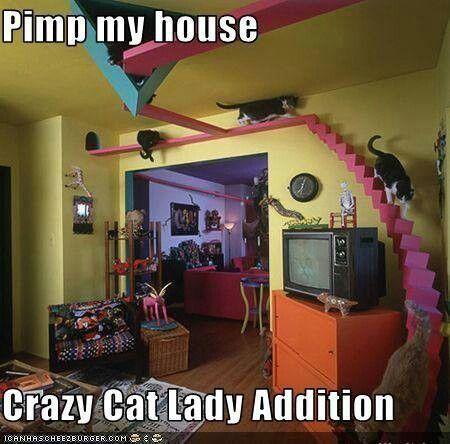 lady with 1-100 cats 1 house and 1 crazy cat lady