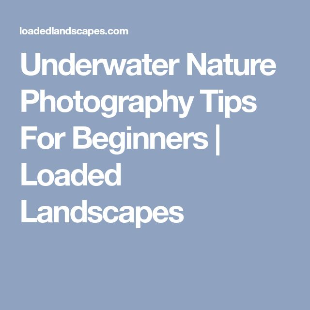 Underwater Nature Photography Tips For Beginners | Loaded Landscapes