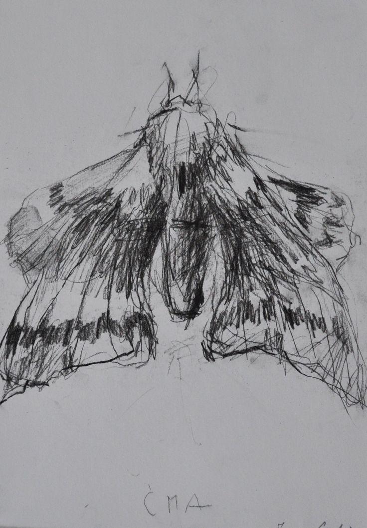 Ćma, Joanna Cisek, A4   rama, węgiel, 2015