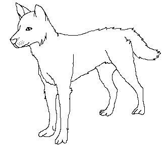dingo dog drawing Google Search Idaho Symbols Pinterest