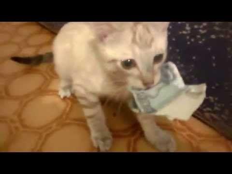 Kitten Refuses to Return Money