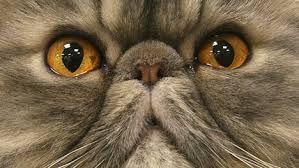Afbeeldingsresultaat voor kattennamen