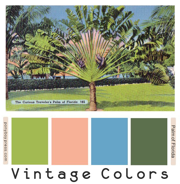 Vintage Color Palettes - Palm of Florida - Hex codes numbers on the blog