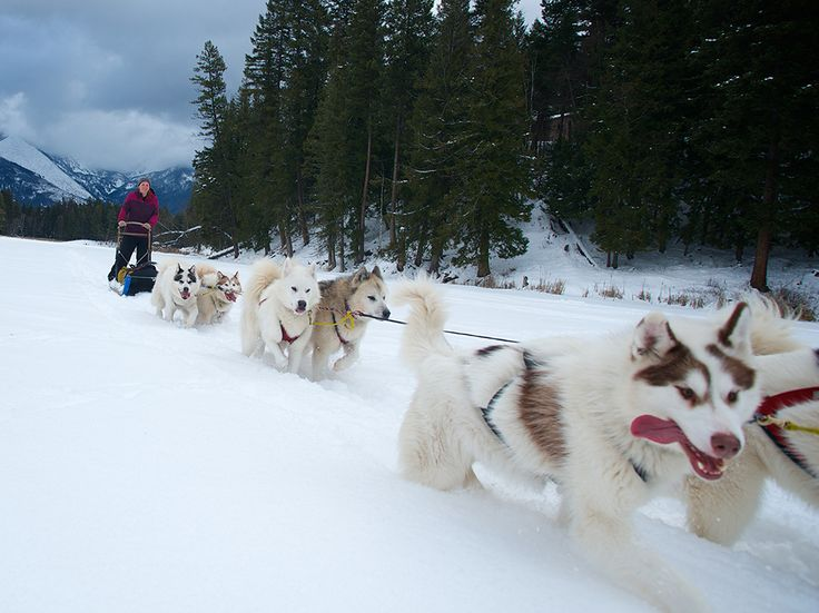 *things i should do-dog sledding* Breaking the Rules of Traditional Photography