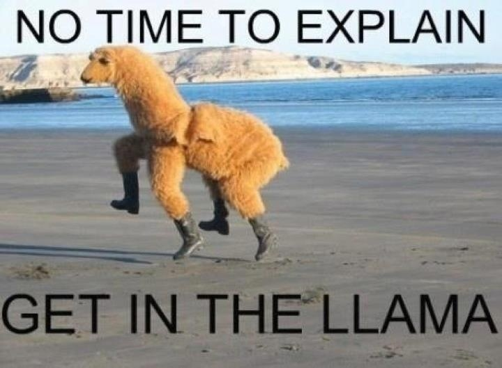 Llama: Make Me Laughing, Halloween Costumes, Giggl, Burning Flames, My Friends, Funny Stuff, Humor, No Time, So Funny