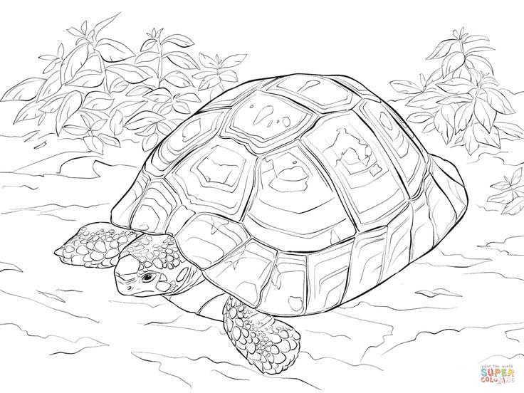 103 best tortoise images on pinterest  tortoise turtles