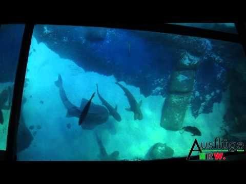 Kurze Videotour durch das Sea Life #Oberhausen http://www.ausflugsziele-nrw.net/sea-life-oberhausen/