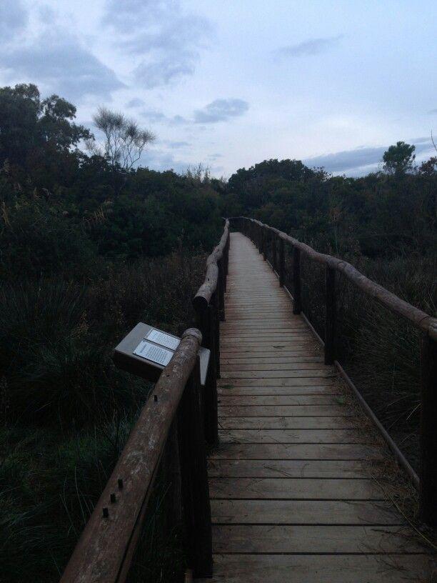 Passaggio verso la laguna di #Orbetello nelka Riserva Forestale Duna di Feniglia.  #Toscana #Maremma