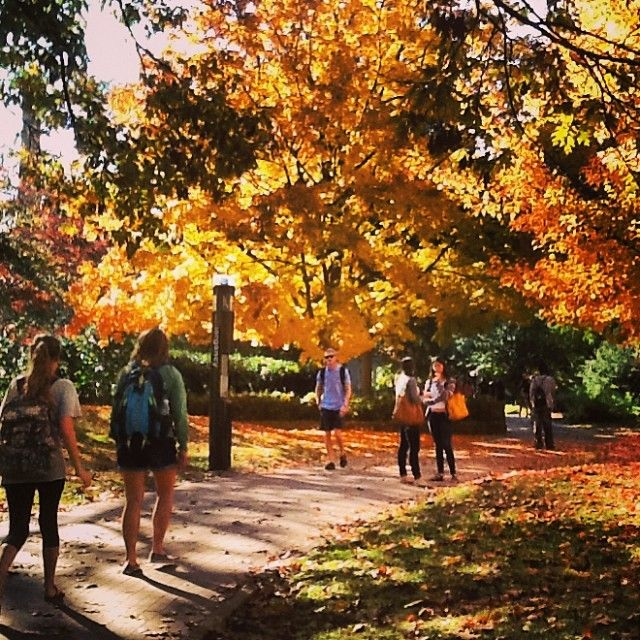 Beautiful everyday scenery for #UofSC students walking to class. Photo by maegan_g: http://instagram.com/p/g3hBZGoujG/Carolina Gamma Phi, Colleges Life, Student, Future Colleges, Beautiful Everyday, Everyday Scenery, Columbia Campus, Carolina Dreams, Phi Beta