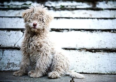 -messy cuteCutest Baby, Happy Mondays, Dogs Pics, Sweets, Cutest Dogs, Pets, New Puppies, Fuzzy Wuzzy, Animal
