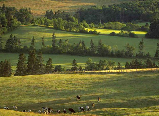 The pastures of Prince Edward Island.