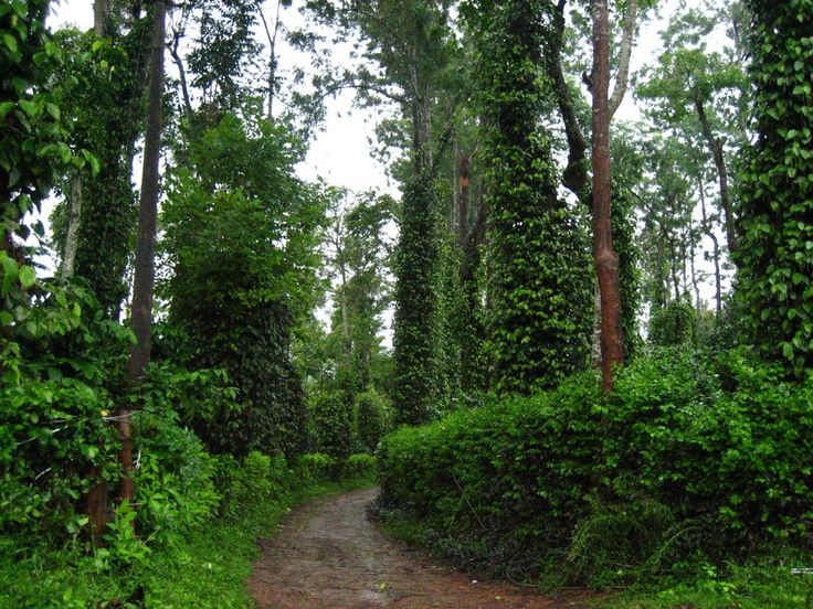 7 Nights & 8 Days Kerala Holiday Packages. Destinations: Marari , Thekkady , Munnar , Kumarakom , Alappuzha Houseboat  Book Now : http://www.vnhindia.com/packages?page_id=30&id=50