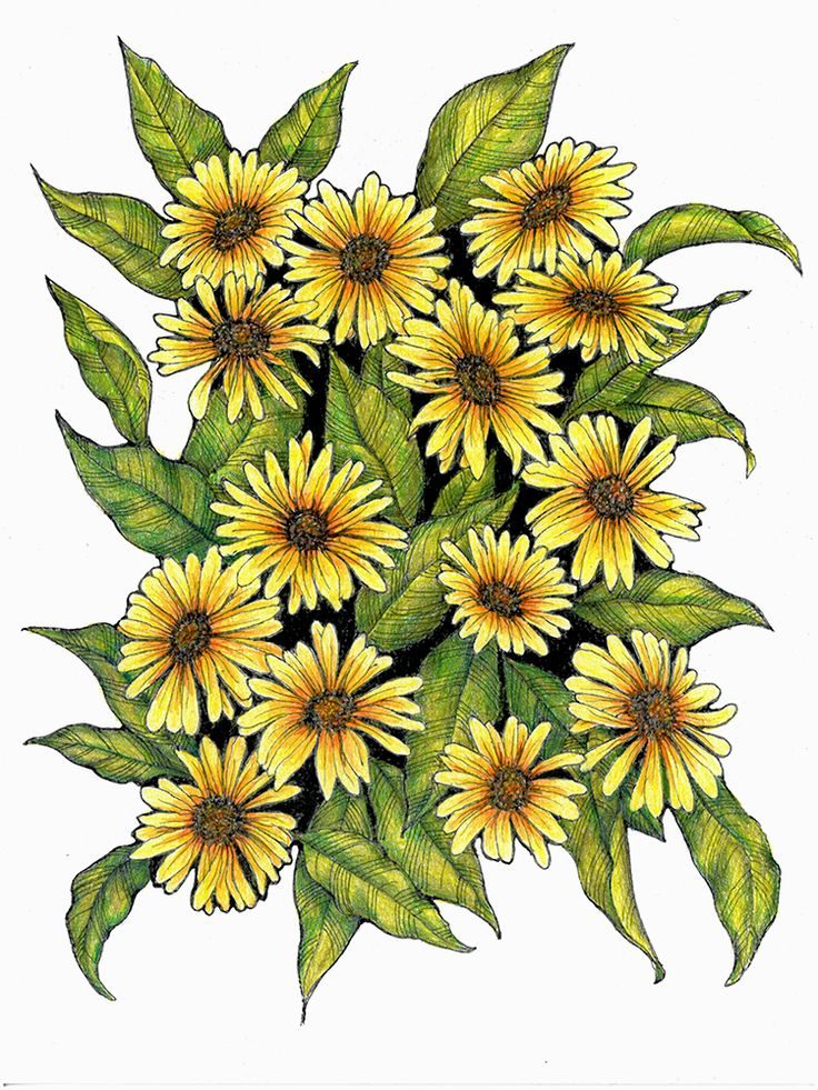 """Pen and colored pencil """"doodle"""" drawing of daisy flowers ..."""