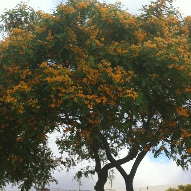 Arvore florida
