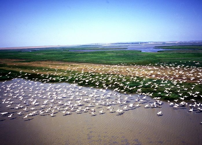 Places To See Before You Die - Danube Delta #Danube #Delta #Romania #Дельта #Дунаю is the second largest river delta in Europe, after Volga Delta, and is the best preserved on the continent. Probably 40 percent of the Delta was built in the last 1000 years. #Romania #unesco #Heritage #vacantapersonalizata #rotravel #ideideweekend #Romania #Trip #Eurotrip #Rotrip #holiday #rotravel #Enisala #Safari,