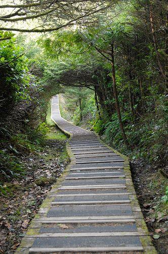 Hiking the Rainforest Trail in Tofino, Vancouver Island, British Columbia...