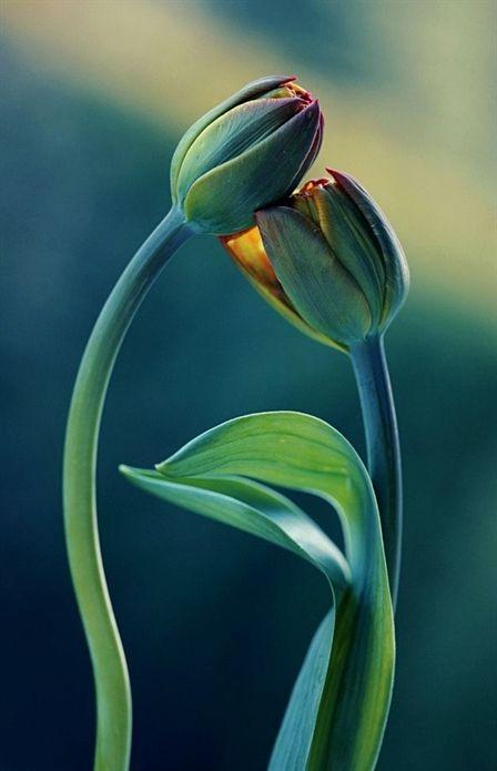 vegetable #gardening accessories vocabulary, yellow leaves on marijuana plants, … – Gardening