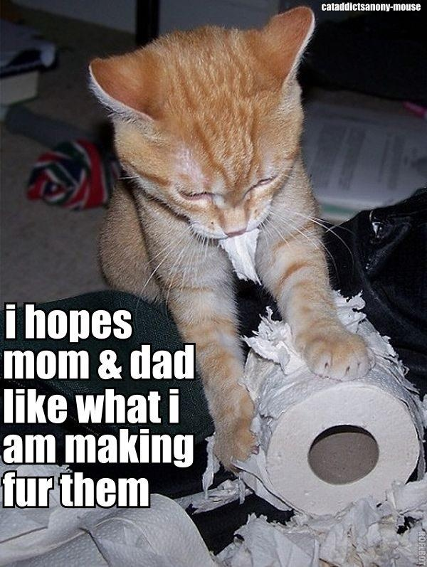 Is that what cj thinks when she does this: Cat Art, Make Art, Funny Animal Pictures, Catart, Kitty Art, Toilets Paper Art, Kittens, So Funny, Silly Cat