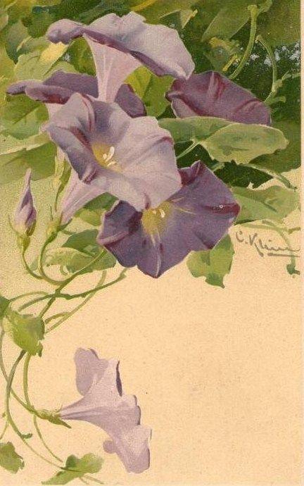 Catherine Klein - purple morning glories vintage botanical illustration, floral art