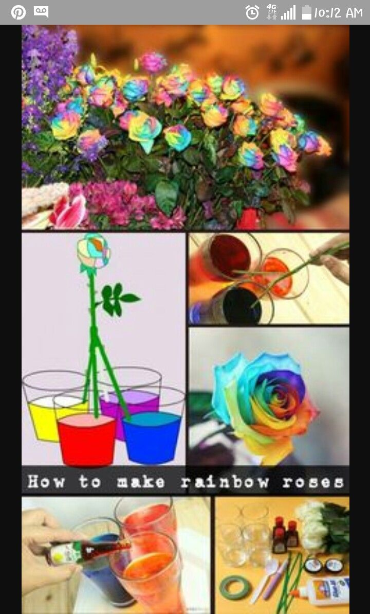 How to color roses