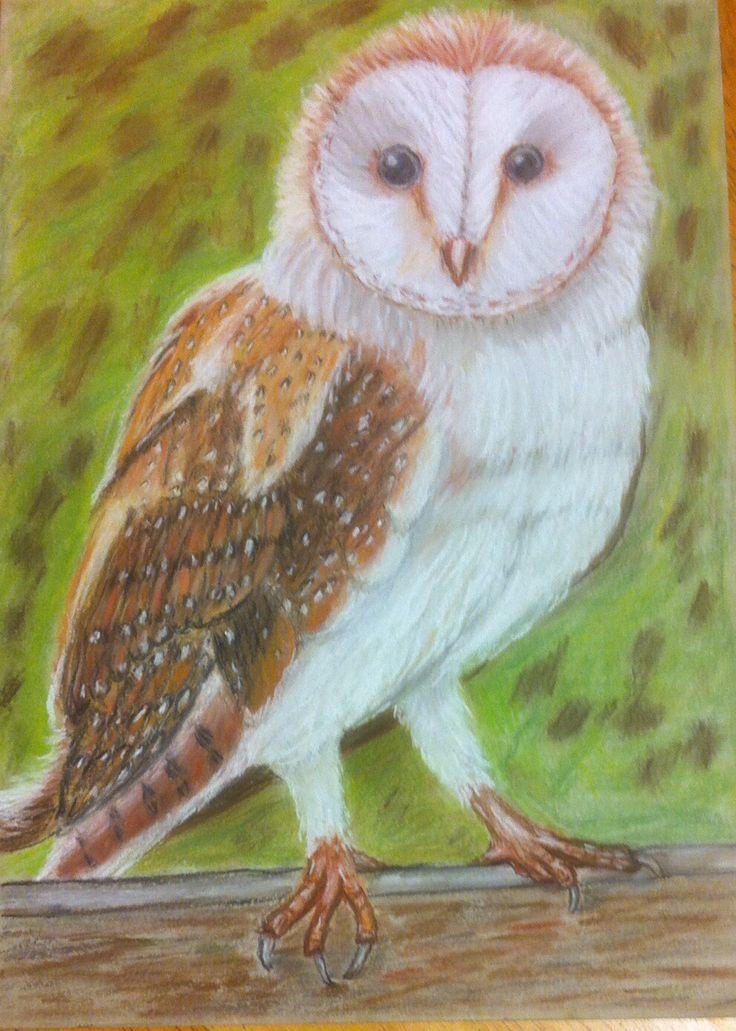Barn Owl ,pastel pencil