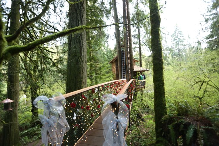 simple treehouse masters mirrors masters mirrors treehouse masters mirrors