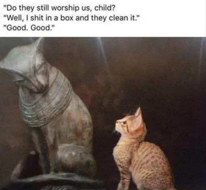 50 Memes That Topped The Charts On Reddit Last Week Memes Best Memes Funny Memes