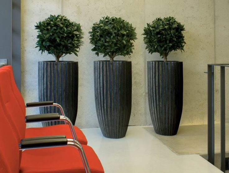 Identical Artificial Bay Laurel Plants In An Office Waiting Area. See
