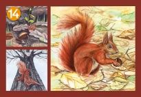 Picture Cards for the Squirrel Lapbook for children. More lapbook resources available at www.kigaportal.com!
