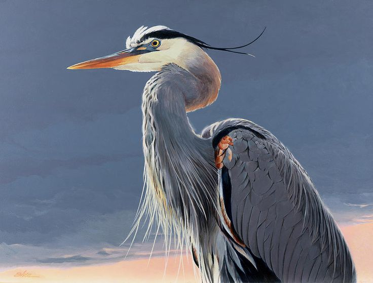 blue heron image   Animal of the day – 02/28/2014 – The Great Blue Heron