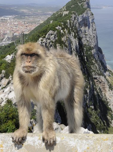 Gibraltar: This British Overseas Territory on the tip of the Iberian Peninsula isn't quite British and it's not quite Spanish, either. You m...