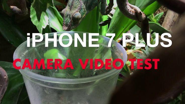 Apple iPhone 7 Plus Camera test 4k video #1
